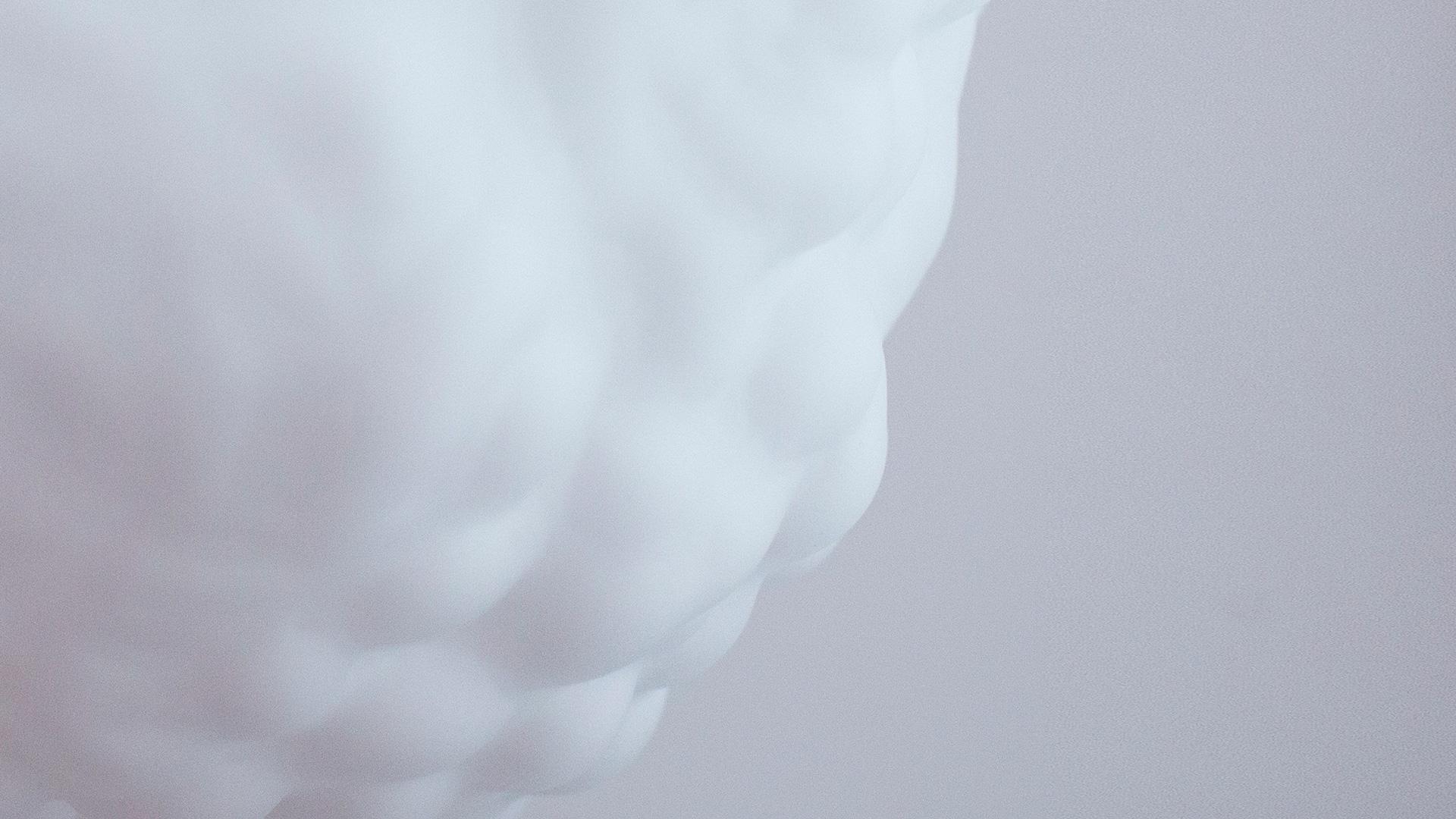 Gyromitra White   produkt1